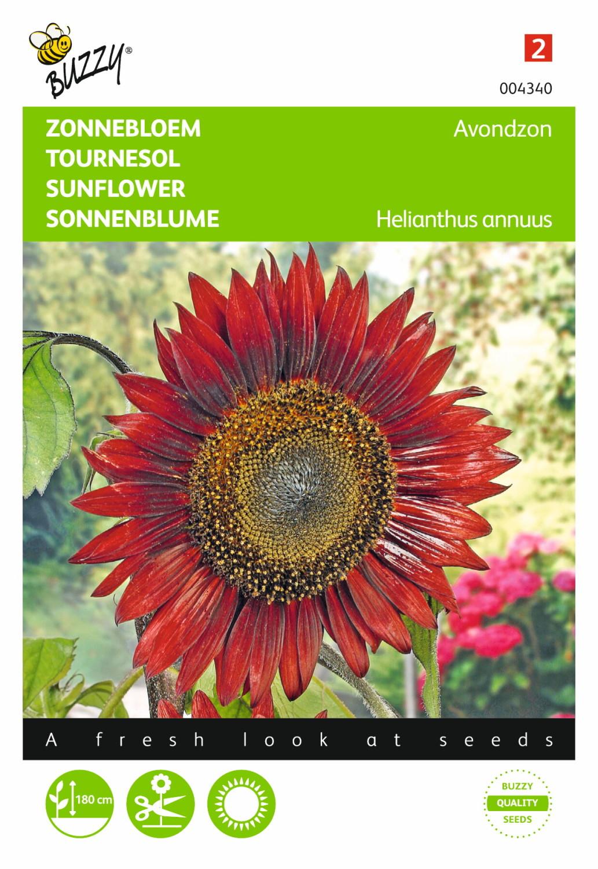 Zonnebloem Avondzonhelianthus Annuus Giganteus 8711117043409